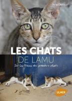 Chats de Lamu