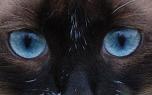 Vignette de la nouvelle Regard de chat