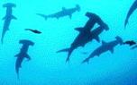 Vignette du livre Sharkwater